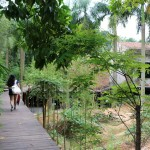 Mirrored Gardens 01