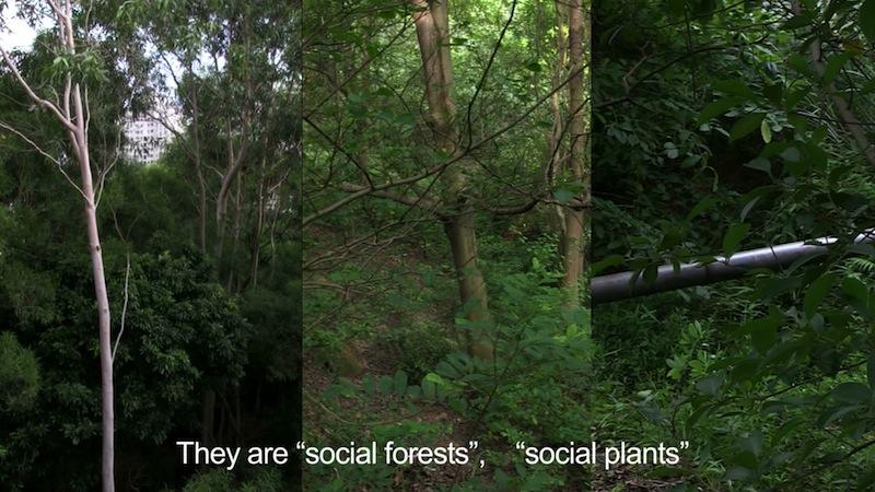 Social Plants &[20121026-1358444]
